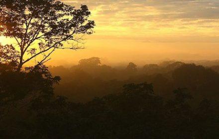 Peruvian Amazon Rainforest 3-Day Itinerary
